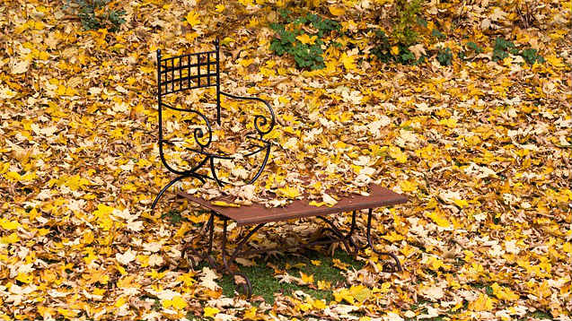 Yellow maple leaves and stool