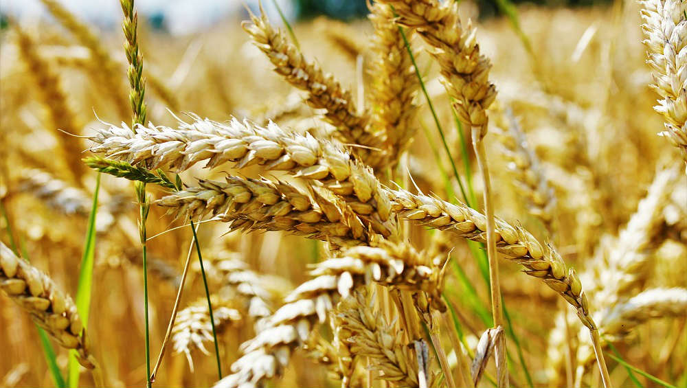 How to Discern the Wheat From the Tares? I Have a Practical Knowledge of This Question