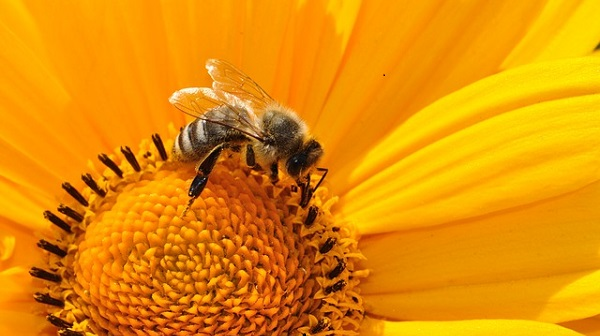 Thanking God's Creation: Knowing God From Bees