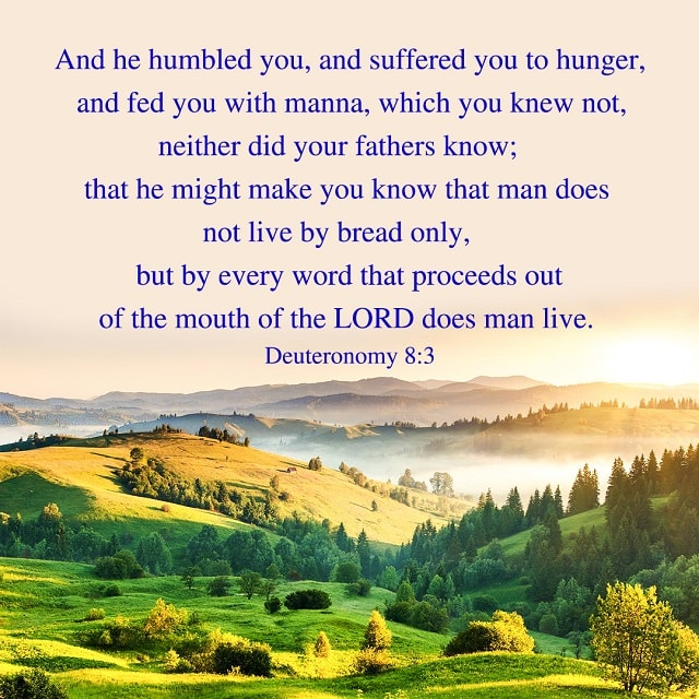 Man Does Not Live by Bread Alone - Deuteronomy 8-3