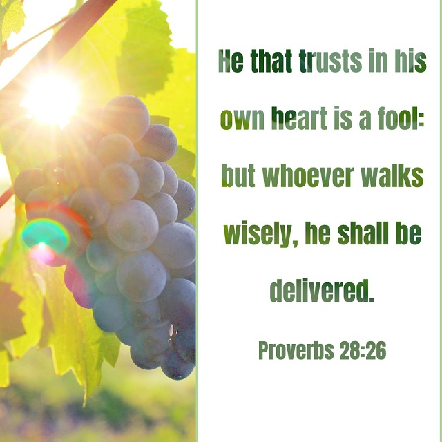 Trust God and Walk Wisely — Proverbs 28:26