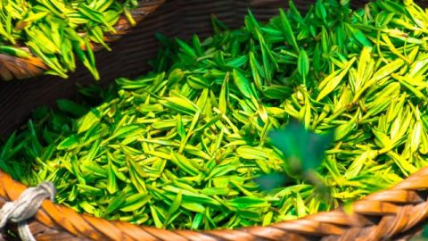 Where Do the Amazing Effects of Tea Come From?