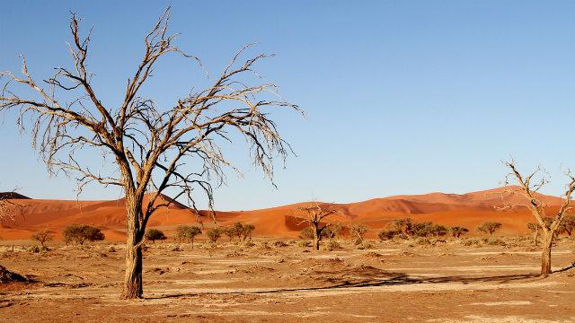 Desert and dead trees