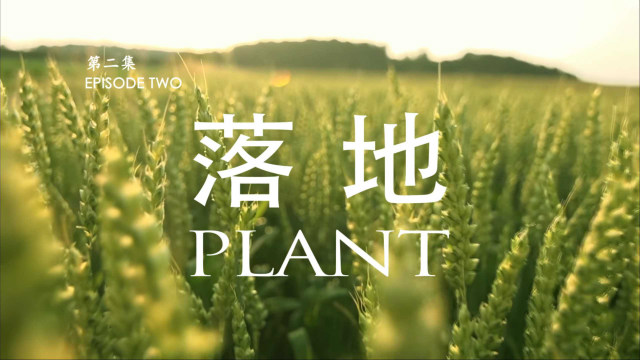 Reflections on the Film Missionary Episode Ⅱ Plant