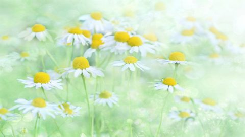 Behind the Medicinal Properties of Plants and Flowers Is God's Love for Mankind