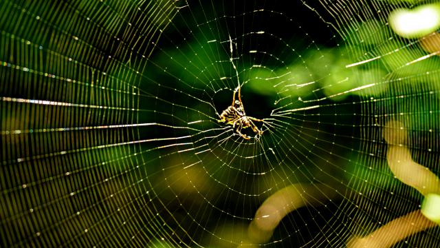 Spiders' Instincts Manifest the Creator's Authority