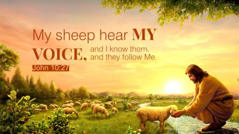 God's Sheep Hear God's Voice—A Commentary on John 10:27