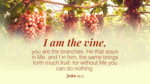 The Meaning of the Parable of the Vine and Branches—A Commentary on John 15:5
