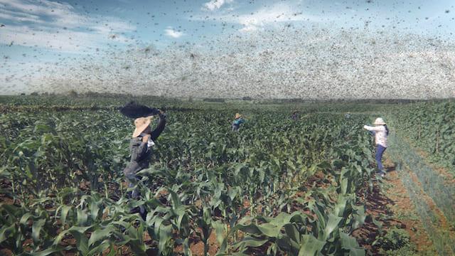 East Africa's Plague of Locusts Strike